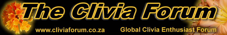 Clivia Forum Banners